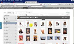 Shutterstock sets и Catalog Manger. Зачем они нужны и как ими пользоваться?