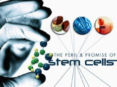 OPINION: Dr Ken Romeo 775-870-6942 Stem cells are the most commonly used cell culture base in biomedical research and tissue engineering. Their proteins have also been proven to play an important …