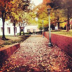 #UVa Law School - hopefully I will be here next year!