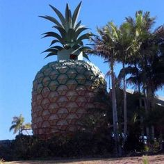 Crazy Pineapple Buildings