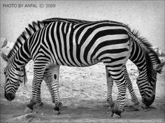DAILY PICS: New & Cool Optical Illusions -- [REPINNED by All Creatures Gift Shop]