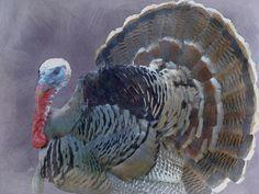 Fat Thanksgiving Bird