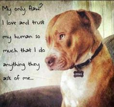 My only flaw?  I love and trust my human so much that I do anything they ask of me.