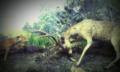 Preserved animal at Bogor Zoological Museum