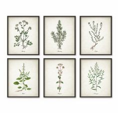 Kitchen Herbs Wall Art Print Set of 6 - Vintage Botanical Herb Prints - Herb Kitchen Decor Illustrations - Picture Set of Six (B509)