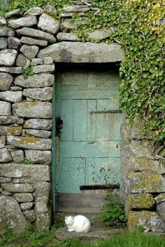 Cornwall, beautifully faded old cottage door and a white cat.                                                                                                                                                                                 More