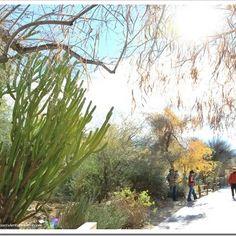 Descubriendo hojas el vivero d blanca en cieneguilla for Vivero el botanico