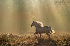 Best of the best - Equine Photography Katarzyna Okrzesik
