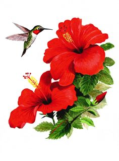 red hibiscus drawing - Google Search