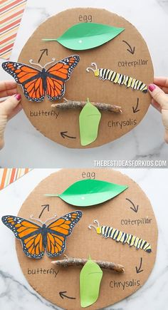 Craft Projects For Kids, Crafts For Kids To Make, Art For Kids, Life Cycle Craft, Life Cycles, Toddler Crafts, Preschool Activities, Butterfly Chrysalis, Butterfly Life Cycle
