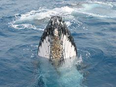 Humpback Whale Watching 101 | Punta Cana Bavaro