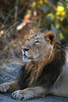 Gir National Park Gujarat Travel Guide