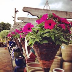 Sienna Flora Nursery Bagshot Road, Chobham, Woking, GU24 8SJ 01276 855408 www.siennaflora.co.uk