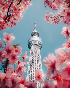 JapanはInstagramを利用しています:「If you have never visited the Tokyo Skytree you must do it one day, preferably in spring. There is no better view of the Tokyo Metropolitan…」 Tokyo Skytree, Tokyo Tower, Hanabi, Sakura, Japan Travel, Nice View, Cn Tower, Seattle, Architecture