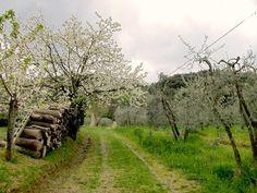 Itinerario trekking 2 giorni in Toscana: ecco a voi il percorso nel dettaglio per vivere il Chianti Classico a ritmo lento!