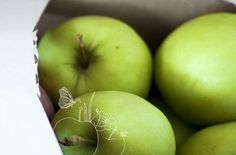 Alles Apfel   Frisch vom Baum