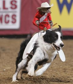 Whiplash -- if you haven't been to a rodeo and seen him, you need to!