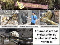 Mural Animal Animais - #FreeArturo  #MendozaStop  #Ecoparque