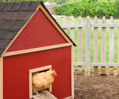 Raising Backyard Chickens (LOVE this coop!