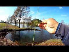 Out and About at Bethany with the Two Weight - Stocker Trout Fishing Stocker Trout Fishing