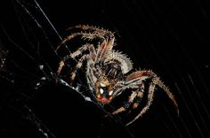 Spider close up by Rustedstrings