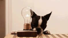 Flyte is a levitating lightbulb powered through the air.
