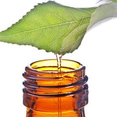 tea-tree oil uses