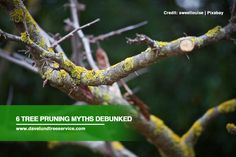 Tree pruning is one of the most well-known tree maintenance procedures around. However, there are various myths surrounding the procedure that can potentially do irreversible damage. Learn the truth behind these myths to better protect your trees.