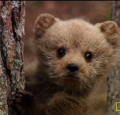 Baby brown bear - bonus points for looking like a toy!