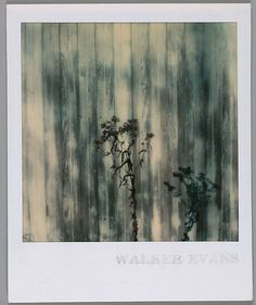 [Shrub in Front of Barn Facade] Walker Evans polaroid