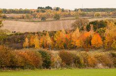 Autumn in Nottinghamshire Newark On Trent, Vineyard, Autumn, Painting, Outdoor, Art, Outdoors, Art Background, Fall Season