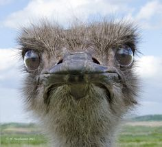 Heehee... it's an ostrich <3 ^~^ :3 You'll understand if you're meant to. :D