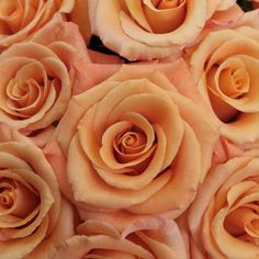 Orange Unique Orange Rose - 25 Roses (Allow 4 Business days for delivery)