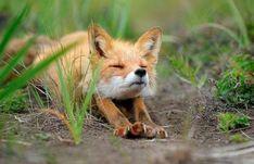 Забавные животные (20 фото)