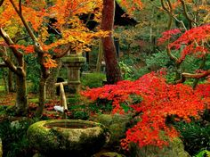 orange and red trees of Kyoto Gardens