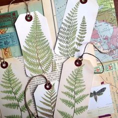 We thought these fern botanical drawings were real!, pressed fronds!