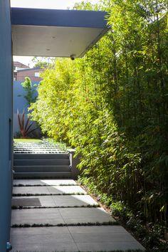 Highfield - Ben Scott Garden Design