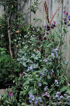 Zo leeg als hij was in het voorjaar, mijn nieuw aangelegde cottage tuin in spe. Nu groeit en bloeit het de perken uit. De geza...