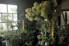 Flower Shop-kojien