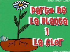Parts de la planta i la flor. Per nens i nenes de 5-6 anys