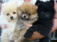 Lookit the little fluffy puppies!!!