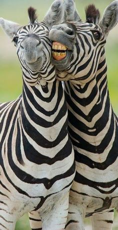that one funny zebra pal we all have :)