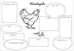 Diagram, Teacher, School, Professor, Schools