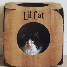 Awwww! Lil Cat is so pretty!  yay! We are so happy she likes it   #cat #catsofinstagram #catstagram #catsagram #cats_of_instagram #catfurnature #catfurniture #catsinboxes #cattoy #INSTACAT_MEOWS #cutecat #PurrMachine #catsinboxes #catbox #Excellent_Cats #BestMeow #dailykittymail #thecatniptimes #catcube #catpod #ArchNemesis #FlyingArchNemesis #myindoorpaws #ififitsisits #cutecatcrew #catchalet #catnip #themeowdaily #kitty #catpyramid #pyramid