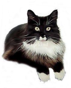 tuxedo maine coon(looks like babykitty!)