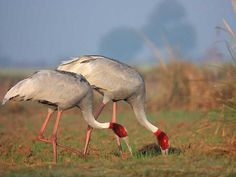 Keoladeo Ghana National Park - in Rajasthan, India