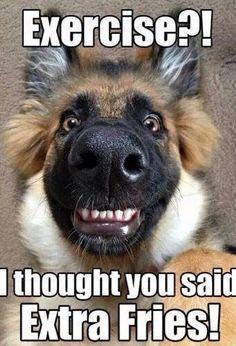 #funny #Animals #humor #fun #memes #jokes #soumo_eu