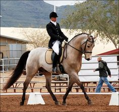 Quarab We are very proud of Fames Moon Shadow +/ for his continued success and impressive wins! This athletic Buckskin is going solid Third Level Dressage, beating some very competitive open horses and riders. He returned from Sport Horse Nationals in Nampa, Idaho placing Top Ten in both Second and Third Levels. The diligence of his owner, Michelle McGonagle and trainer, Jennette Scanlon, is paying off with consistent wins and blue ribbons.