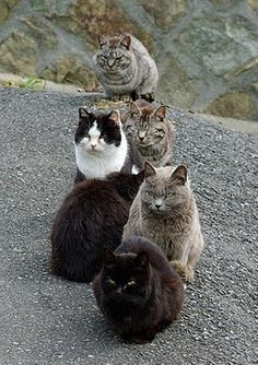 "Feline Residents of Japan's ""Cat Island"", the island of Tashirojima"