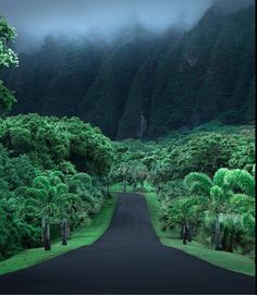 Drive into the #forest with you. ~ETS